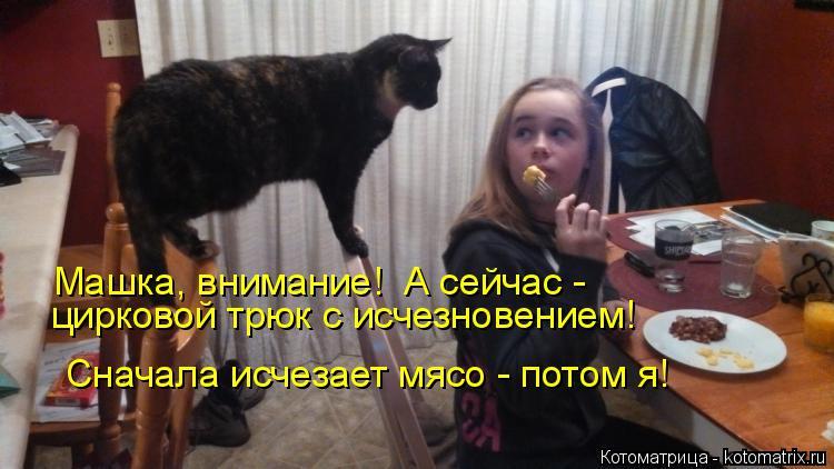 Котоматрица: Машка, внимание!  А сейчас - цирковой трюк с исчезновением! Сначала исчезает мясо - потом я!