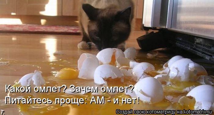 Котоматрица: Какой омлет? Зачем омлет? Питайтесь проще: АМ - и нет!