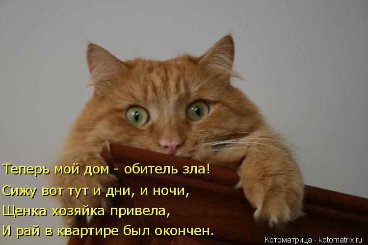 Котоматрица: Теперь мой дом - обитель зла! Сижу вот тут и дни, и ночи, Щенка хозяйка привела, И рай в квартире был окончен.