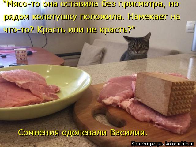 """Котоматрица: Сомнения одолевали Василия. """"Мясо-то она оставила без присмотра, но  рядом колотушку положила. Намекает на что-то? Красть или не красть?"""""""
