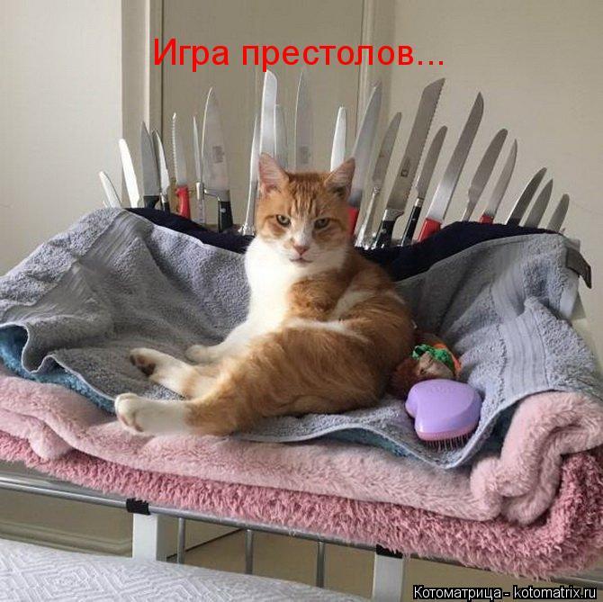 Котоматрица: Игра престолов...