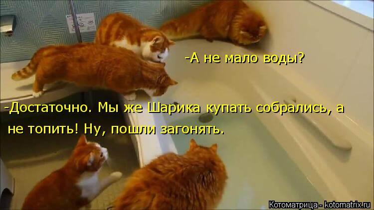 Котоматрица: -А не мало воды? -Достаточно. Мы же Шарика купать собрались, а  не топить! Ну, пошли загонять.