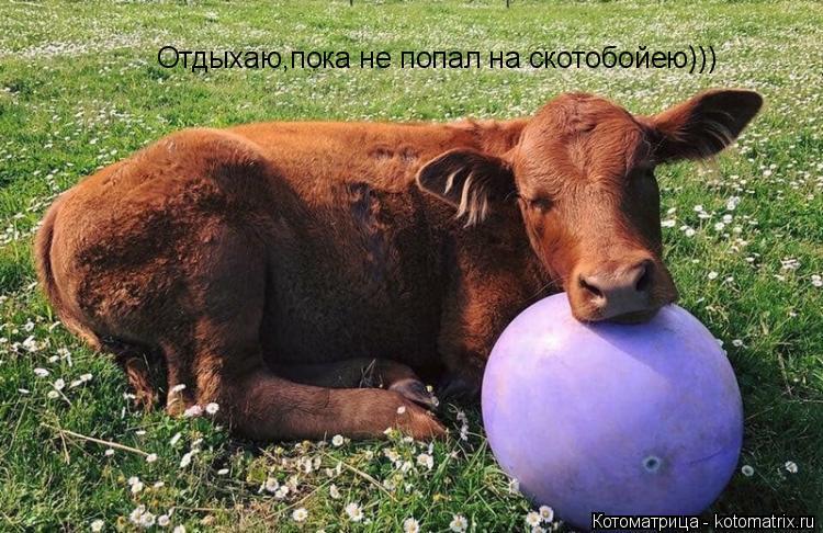 Котоматрица: Отдыхаю,пока не попал на скотобойею)))