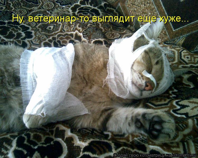 Котоматрица: Ну, ветеринар-то выглядит еще хуже...