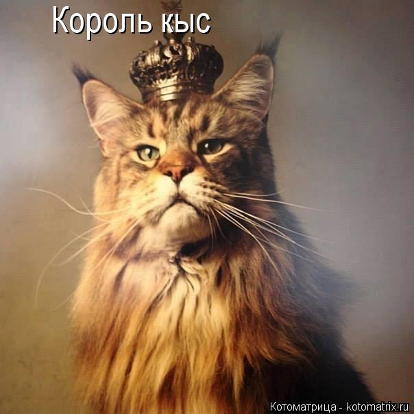 Котоматрица: Король кыс