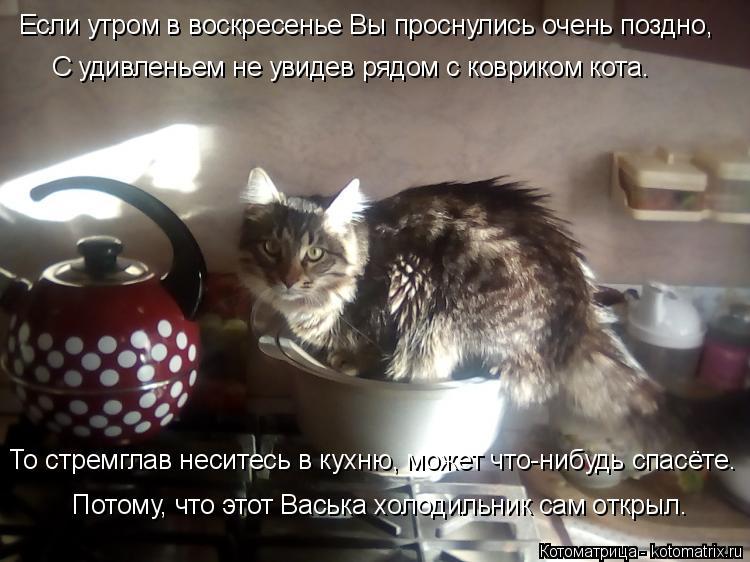Котоматрица: Если утром в воскресенье Вы проснулись очень поздно, С удивленьем не увидев рядом с ковриком кота. То стремглав неситесь в кухню, может что-?