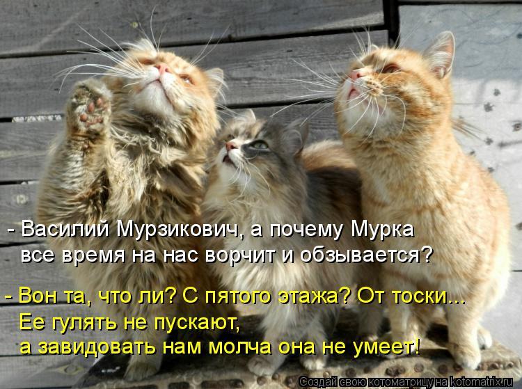 Котоматрица: - Василий Мурзикович, а почему Мурка  все время на нас ворчит и обзывается? - Вон та, что ли? С пятого этажа? От тоски... Ее гулять не пускают,  а з