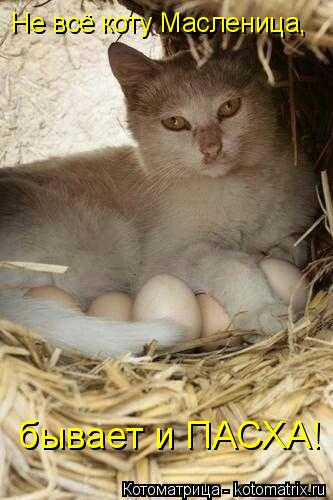 Котоматрица: Не всё коту Масленица, бывает и ПАСХА!