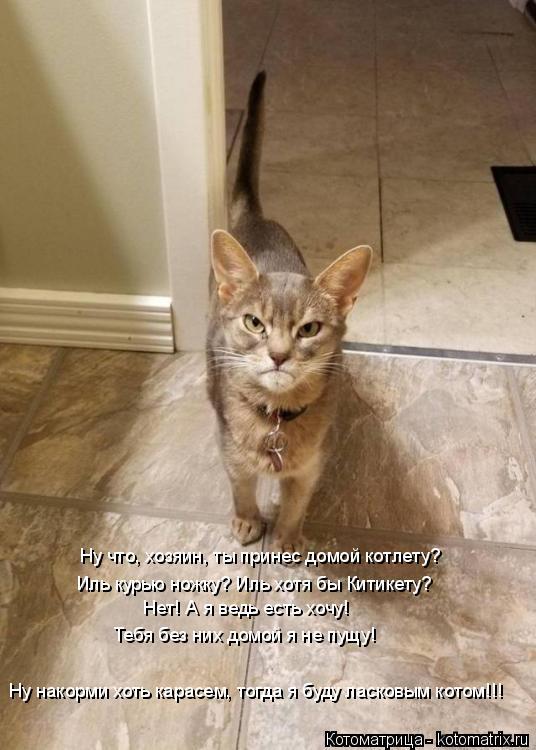 Котоматрица: Ну накорми хоть карасем, тогда я буду ласковым котом!!! Ну что, хозяин, ты принес домой котлету? Иль курью ножку? Иль хотя бы Китикету? Нет! А я ?