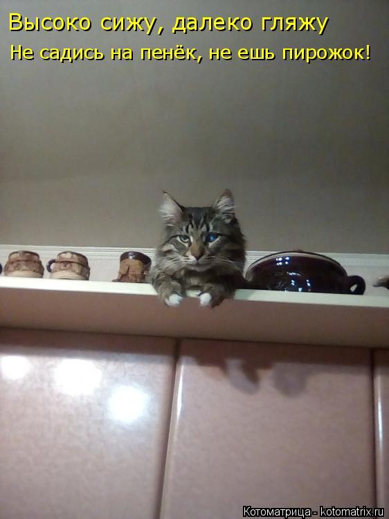 Котоматрица: Высоко сижу, далеко гляжу Не садись на пенёк, не ешь пирожок!