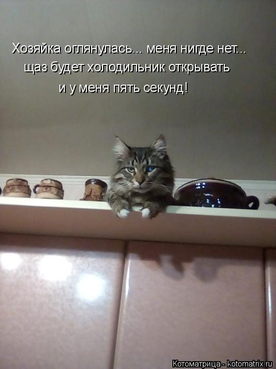 Котоматрица: Хозяйка оглянулась... меня нигде нет... щаз будет холодильник открывать  и у меня пять секунд!