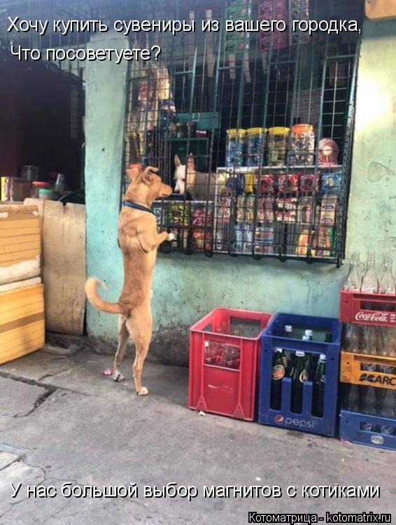 Котоматрица: Хочу купить сувениры из вашего городка, Что посоветуете? У нас большой выбор магнитов с котиками