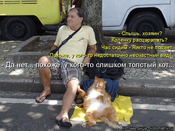 Котоматрица: - Да нет... похоже, у кого-то слишком толстый кот... Похоже, у кого-то недостаточно несчастный вид! Час сидим - никто не подает.  Коленку расцарап