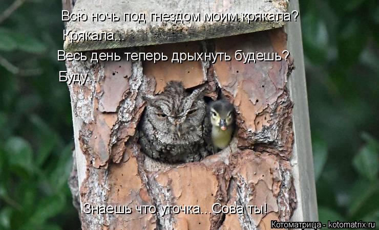 Котоматрица: Всю ночь под гнездом моим крякала? Крякала... Весь день теперь дрыхнуть будешь? Буду... Знаешь что,уточка...Сова ты!