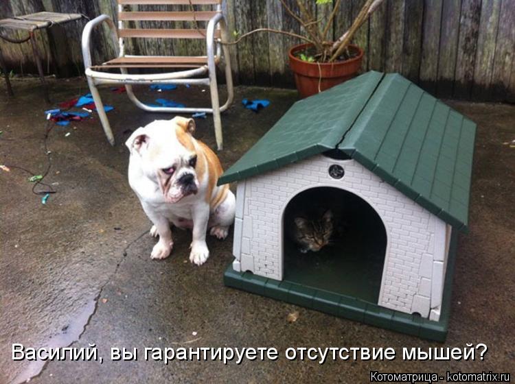 Котоматрица: Василий, вы гарантируете отсутствие мышей?