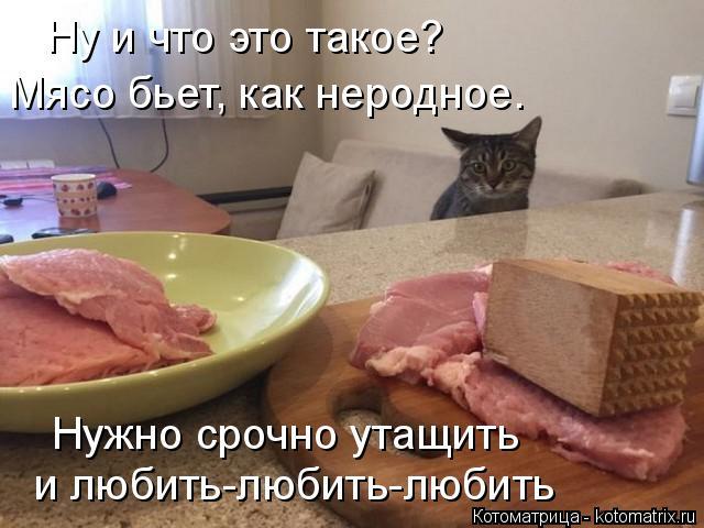 Котоматрица: Ну и что это такое? Мясо бьет, как неродное. Нужно срочно утащить и любить-любить-любить