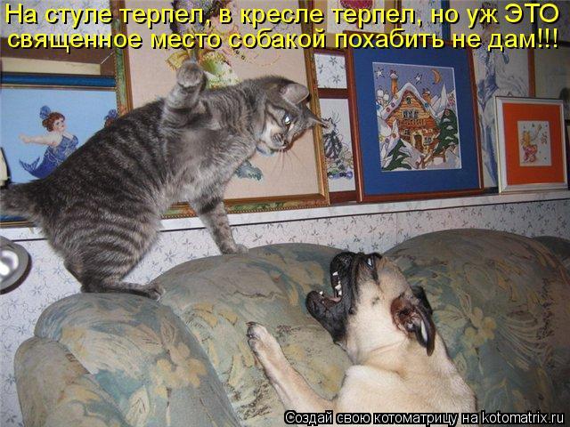 Котоматрица: священное место собакой похабить не дам!!! На стуле терпел, в кресле терпел, но уж ЭТО