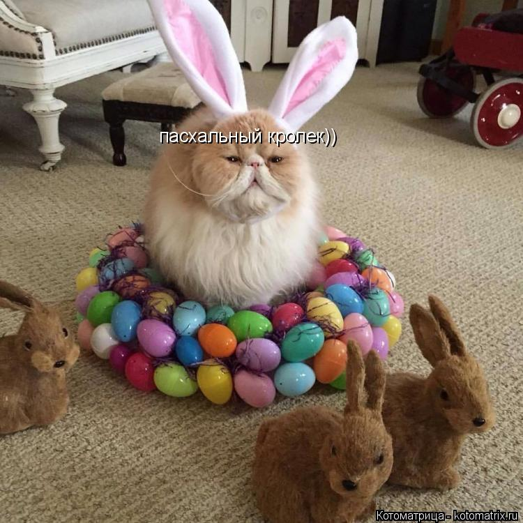 Котоматрица: пасхальный кролек))