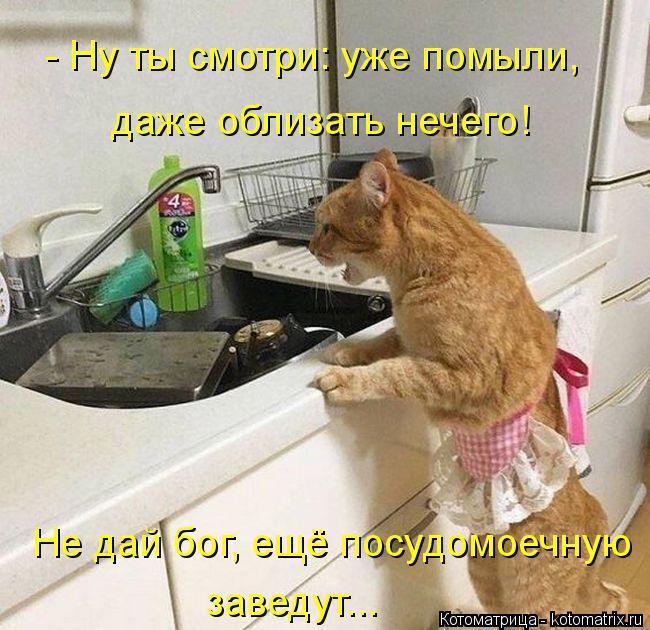 Котоматрица: даже облизать нечего! - Ну ты смотри: уже помыли, Не дай бог, ещё посудомоечную заведут...