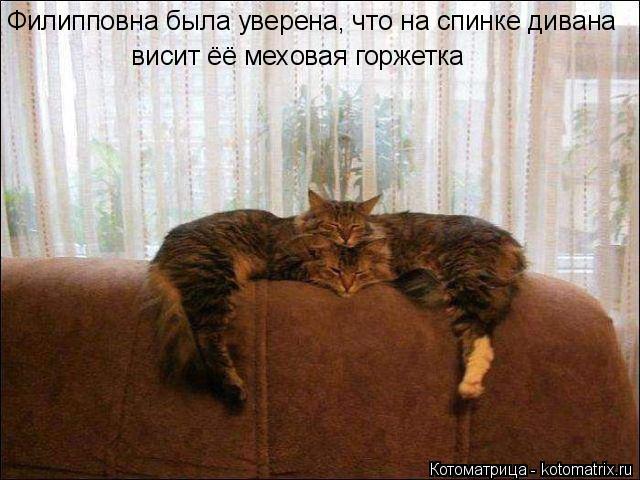 Котоматрица: Филипповна была уверена, что на спинке дивана  висит ёё меховая горжетка
