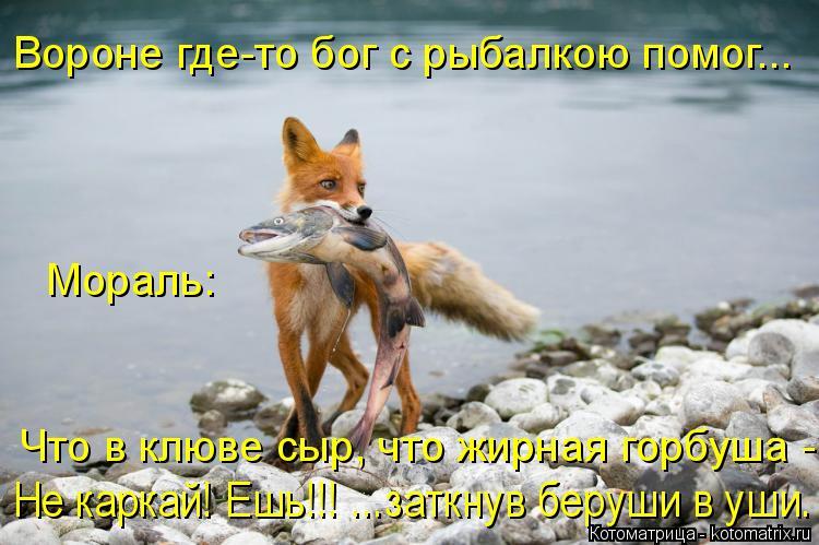 Котоматрица: Вороне где-то бог с рыбалкою помог... Мораль: Что в клюве сыр, что жирная горбуша - Не каркай! Ешь!!! ...заткнув беруши в уши.
