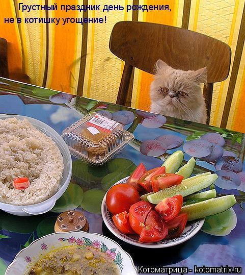 Котоматрица: Грустный праздник день рождения, не в котишку угощение!