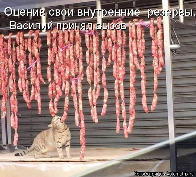 Котоматрица: Оценив свои внутренние  резервы, Василий принял вызов