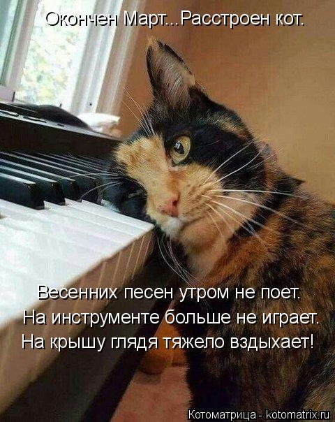 Котоматрица: Окончен Март...Расстроен кот. На инструменте больше не играет. Весенних песен утром не поет. На крышу глядя тяжело вздыхает!