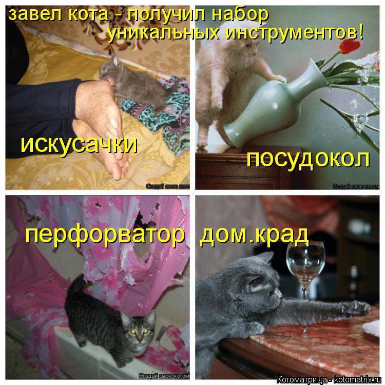 Котоматрица: завел кота - получил набор уникальных инструментов! искусачки посудокол перфорватор  дом.крад