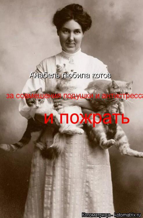 Котоматрица: за совмешения подушки и антистресса  и пожрать  Анабель любила котов