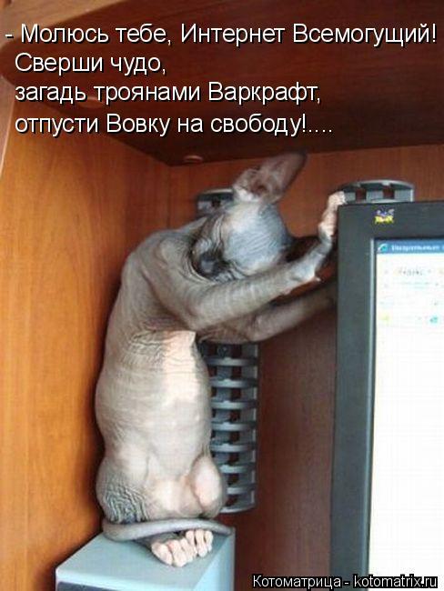 Котоматрица: Сверши чудо,  - Молюсь тебе, Интернет Всемогущий! загадь троянами Варкрафт, отпусти Вовку на свободу!....