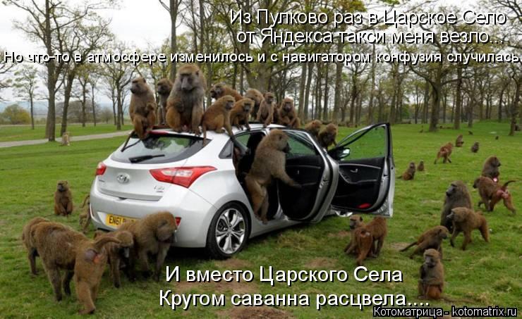 Котоматрица: Из Пулково раз в Царское Село   от Яндекса такси меня везло... И вместо Царского Села Кругом саванна расцвела.... Но что-то в атмосфере изменил?
