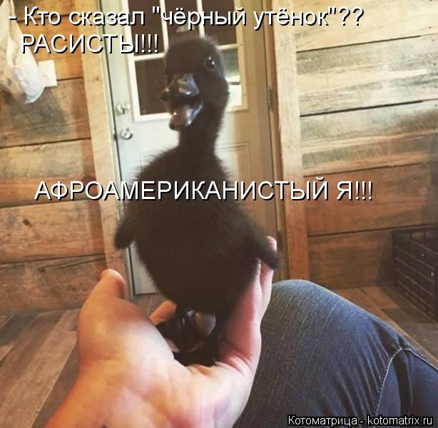 """Котоматрица: - Кто сказал """"чёрный утёнок""""?? РАСИСТЫ!!! АФРОАМЕРИКАНИСТЫЙ Я!!!"""