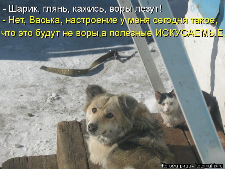 Котоматрица: - Шарик, глянь, кажись, воры лезут! - Нет, Васька, настроение у меня сегодня такое, что это будут не воры,а полезные ИСКУСАЕМЫЕ.
