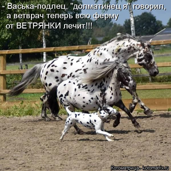 """Котоматрица: - Васька-подлец, """"долматинец я"""" говорил,  а ветврач теперь всю ферму от ВЕТРЯНКИ лечит!!!"""