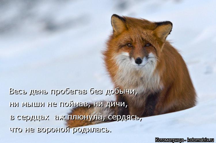 Котоматрица: Весь день пробегав без добычи, ни мыши не поймав, ни дичи, в сердцах  аж плюнула, сердясь, что не вороной родилась.