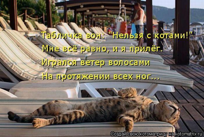 """Котоматрица: Табличка вон: """"Нельзя с котами!"""" Мне всё равно, и я прилёг. Игрался ветер волосами На протяжении всех ног..."""