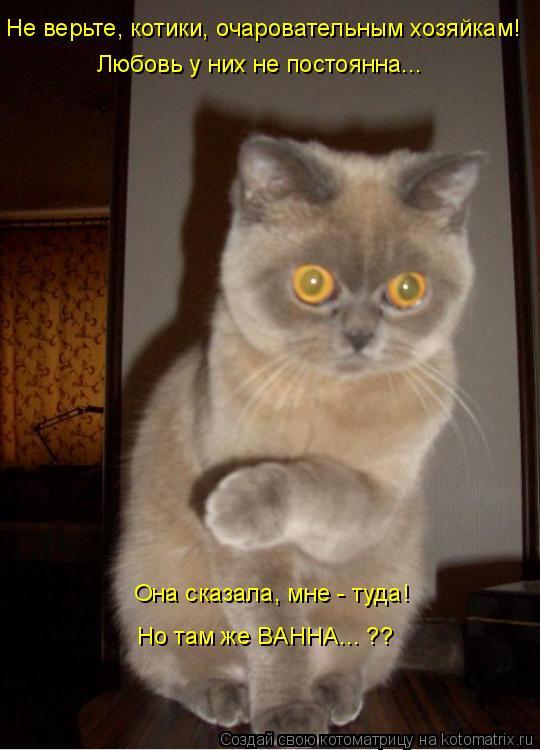 Котоматрица: Не верьте, котики, очаровательным хозяйкам! Любовь у них не постоянна... Она сказала, мне - туда! Но там же ВАННА... ??