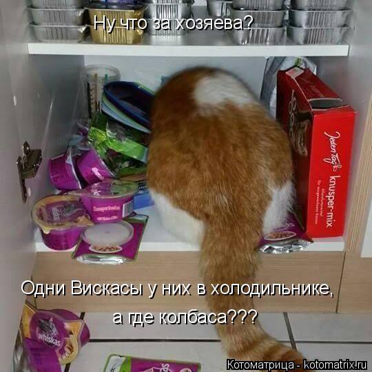 Котоматрица: Ну что за хозяева? Одни Вискасы у них в холодильнике, а где колбаса???