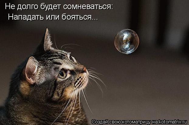 Котоматрица: Не долго будет сомневаться: Нападать или бояться...