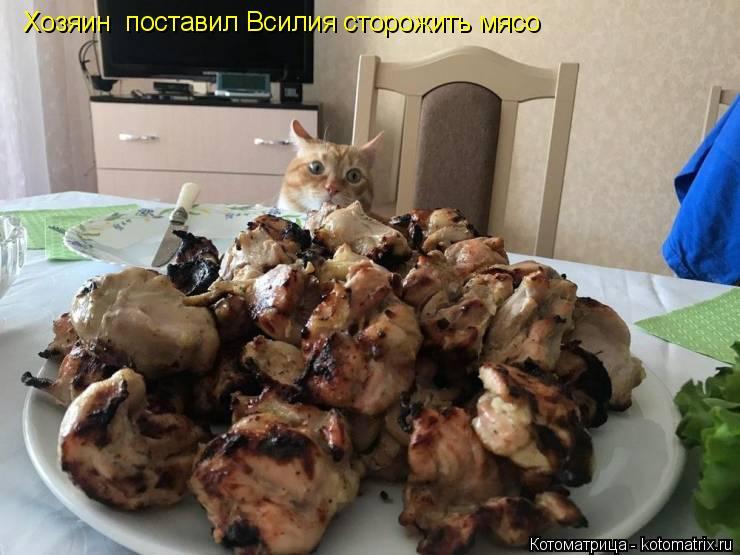 Котоматрица: Хозяин  поставил Всилия сторожить мясо