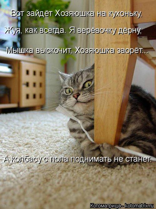 Котоматрица: Вот зайдёт Хозяюшка на кухоньку, Мышка выскочит, Хозяюшка заорёт... Жуя, как всегда. Я верёвочку дёрну, А колбасу с пола поднимать не станет.