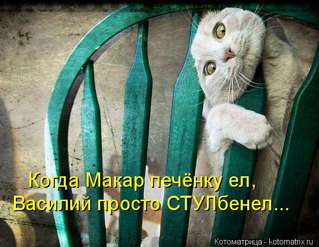 Котоматрица: Когда Макар печёнку ел, Василий просто СТУЛбенел...