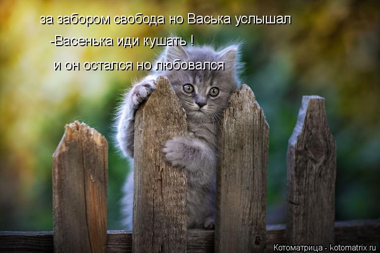 Котоматрица: за забором свобода но Васька услышал   -Васенька иди кушать !  и он остался но любовался