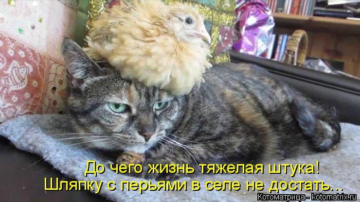 Котоматрица: До чего жизнь тяжелая штука! Шляпку с перьями в селе не достать...
