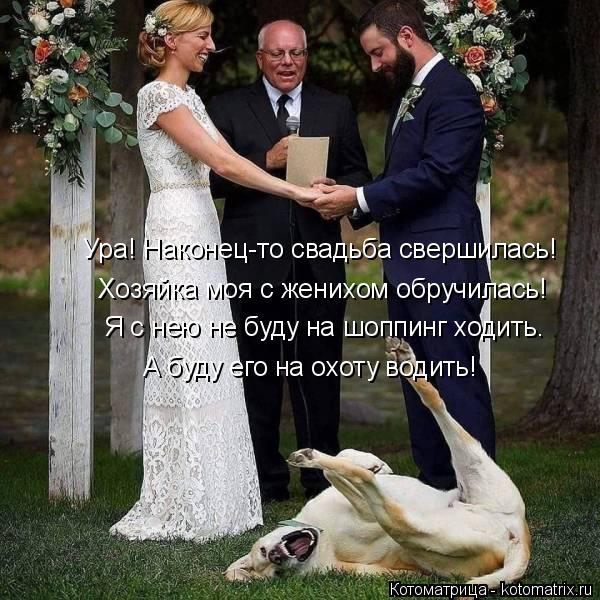 Котоматрица: Ура! Наконец-то свадьба свершилась! Хозяйка моя с женихом обручилась! Я с нею не буду на шоппинг ходить. А буду его на охоту водить!