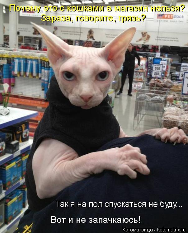 Котоматрица: Почему это с кошками в магазин нельзя? Зараза, говорите, грязь? Так я на пол спускаться не буду... Вот и не запачкаюсь!