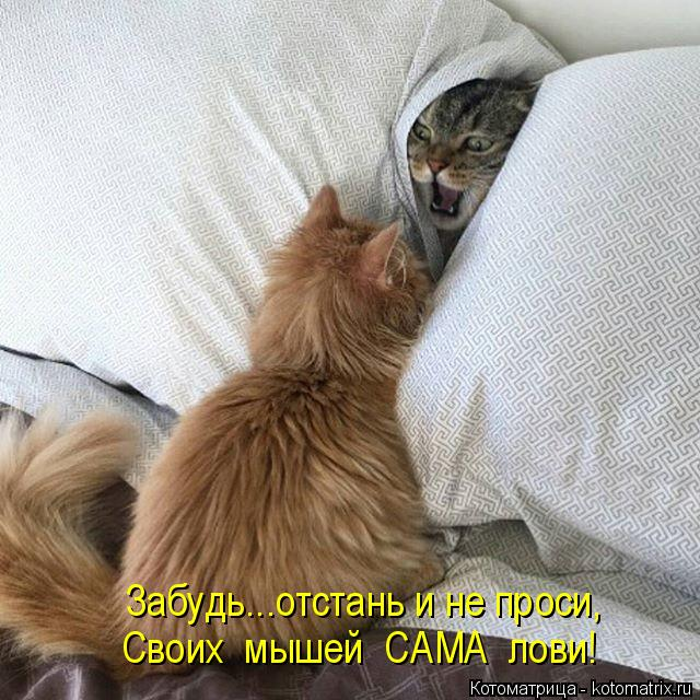 Котоматрица: Забудь...отстань и не проси, Своих  мышей  САМА  лови!
