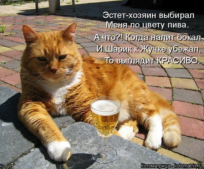 Котоматрица: Эстет-хозяин выбирал Меня по цвету пива. А что?! Когда налит бокал И Шарик к Жучке убежал, То выглядит КРАСИВО.