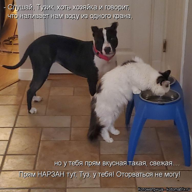 Котоматрица: - Слушай, Тузик, хоть хозяйка и говорит, что наливает нам воду из одного крана,  но у тебя прям вкусная такая, свежая.... Прям НАРЗАН тут, Туз, у т